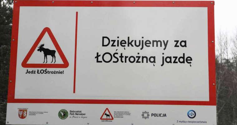 Jedź ŁOŚtrożnie! - tablice ustawione przy drogach w Biebrzańskim Parku Narodowym