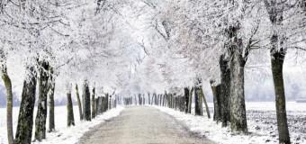 Koniec z sadzeniem przy drogach więcej drzew niż wycięto