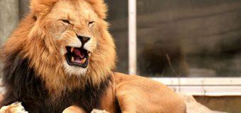 Droga to dżungla. A Ty jesteś lwem, lemurem czy gepardem? Sprawdź