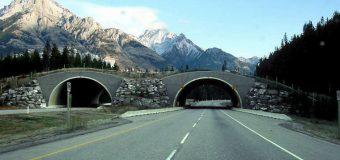 Kanadyjczycy podnieśli prędkość na autostradach do 120 km/h. Zaczęło ginąć dwukrotnie więcej ludzi