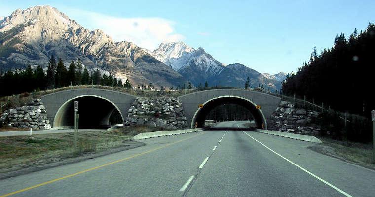 Autostrada w Kanadzie przebiegająca przez Banff National Park. Fot. Qyd/CC BY 3.0