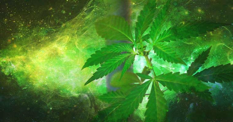 Marihuana Fot. CC0