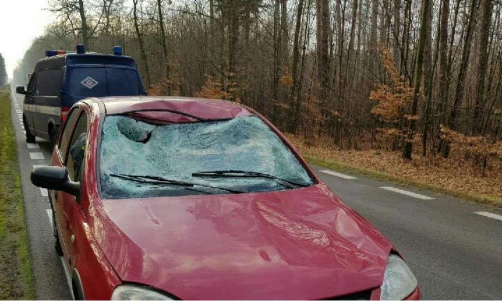 Wypadek z jeleniem koło Piotrkowa Trybunalskiego. Fot. Policja
