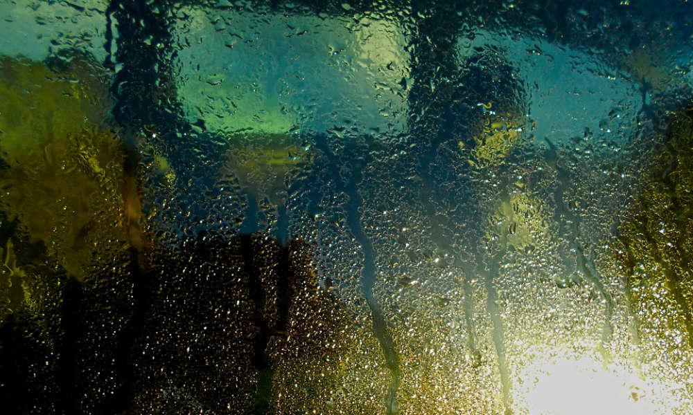 Mokra i zaparowana szyba w samochodzie może być przyczyną poważnych kłopotów na drodze. Fot. CC0