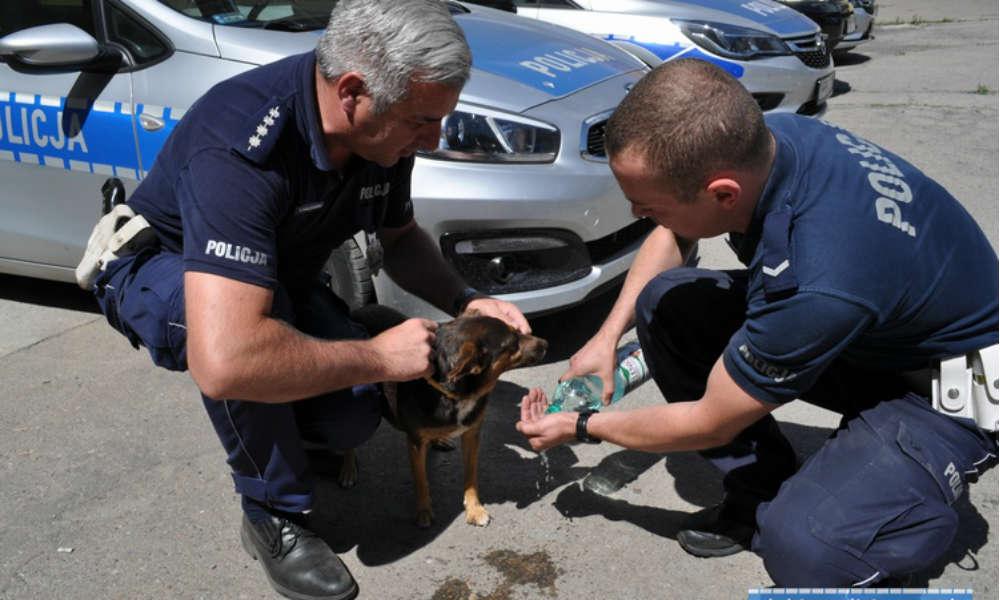Policjanci odnaleźli psa. Szukał go chłopiec, który stracił w wypadku mamę i siostrę. Fot. Policja