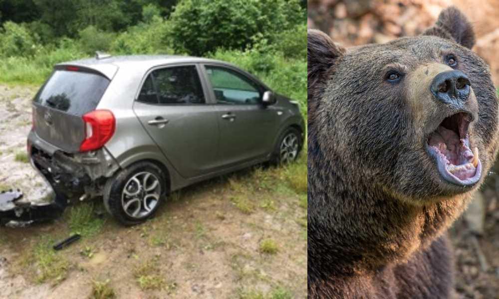 Niedźwiedź brunatny zniszczył samochód turystów w Bieszczadach. Źródło Facebook/Nadleśnictwo Cisna/CC0